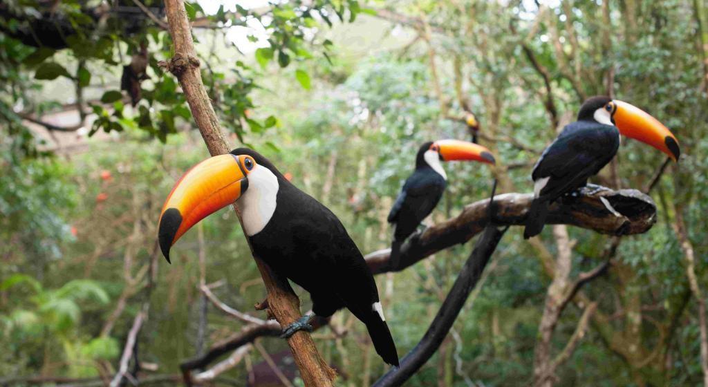 parque-das-aves-foz-do-iguacu