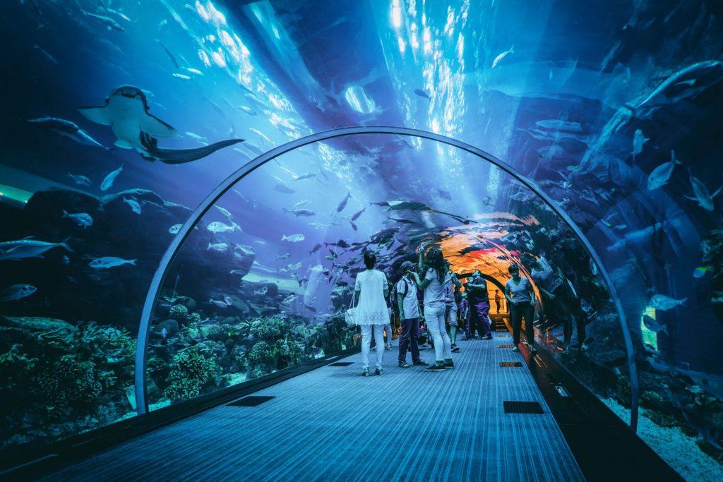 baia-aquario-san-francisco